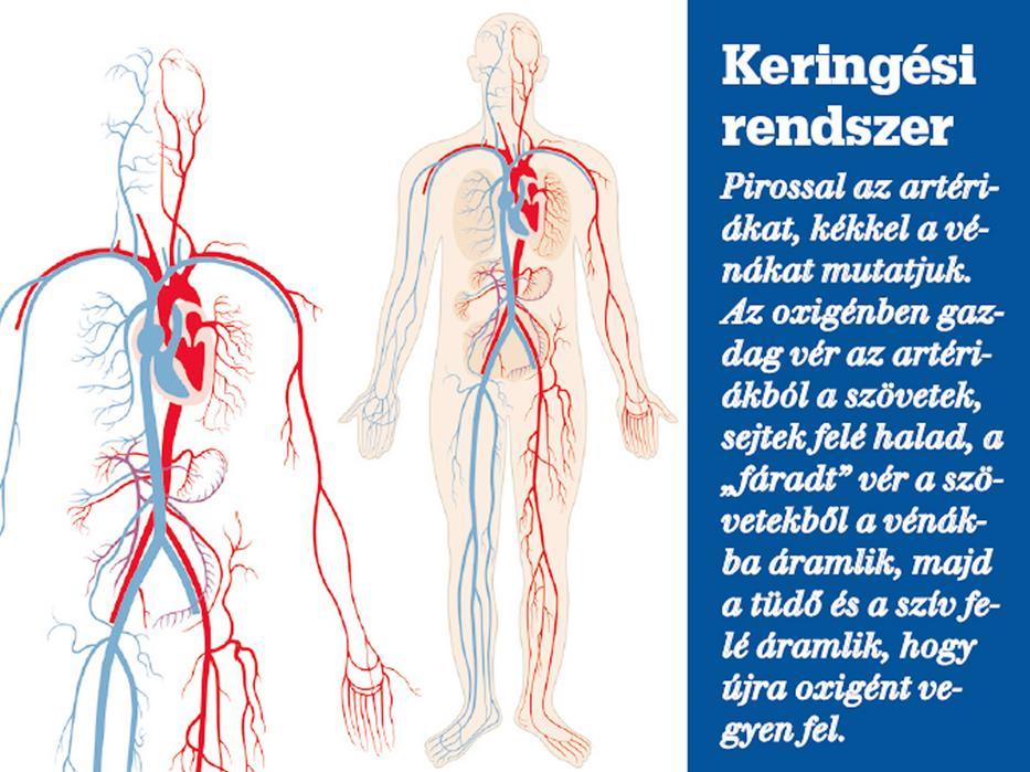 kézi vénák magas vérnyomás magas vérnyomás 2 fokozatú 3 kockázatú kezelés népi gyógymódokkal