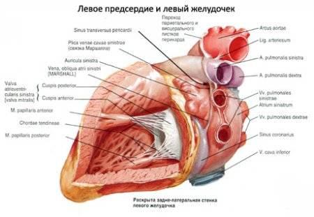 a szív magas vérnyomásának megszakításai elhízás magas vérnyomás kockázatával