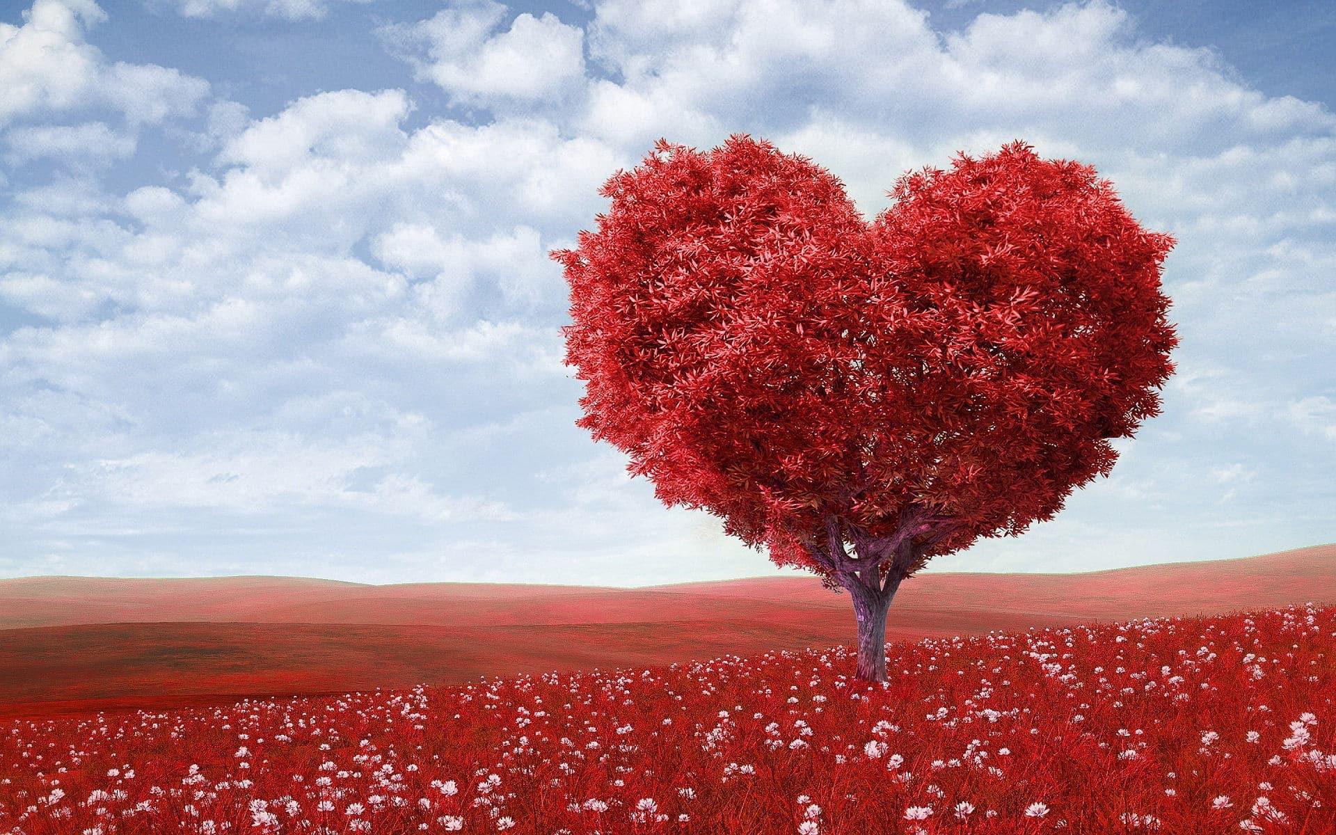 Mi mutatja a szív EKG-jét, dekódolva felnőttekben