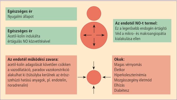 I. Sz. Gyermekgyógyászati Klinika – Semmelweis Egyetem, Általános Orvostudományi Kar