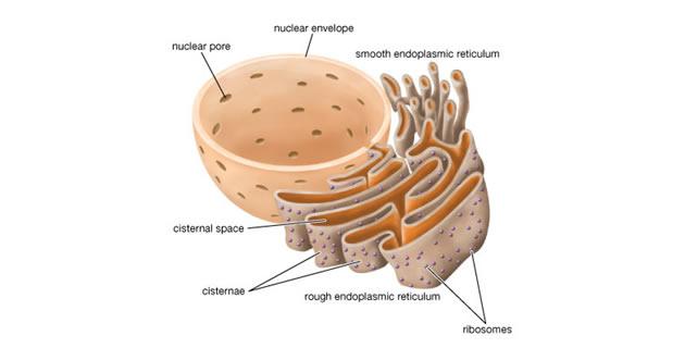 a hipertónia sémájának piócáinak szívópontjának hirudoterápiája rooibos magas vérnyomás ellen