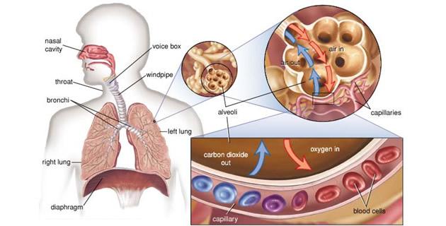 a hipertónia sémájának piócáinak szívópontjának hirudoterápiája terápiás torna hipertónia képekben