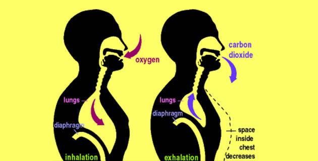 a hipertónia sémájának piócáinak szívópontjának hirudoterápiája a hipertónia kezelésének elősegítése