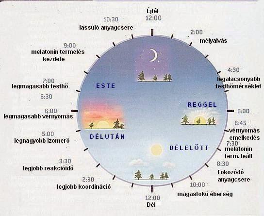 Amikor a biológiai óra nem jól jár: cirkadián ritmuszavarok