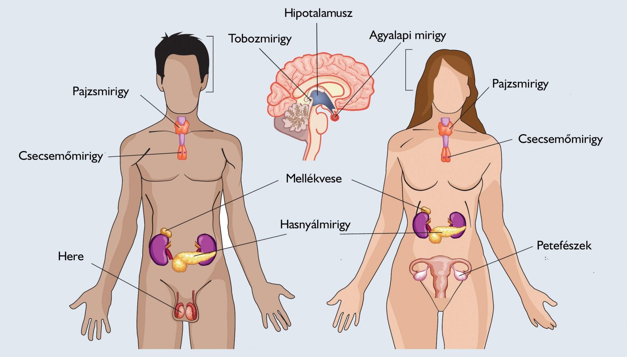 endokrinológia és magas vérnyomás