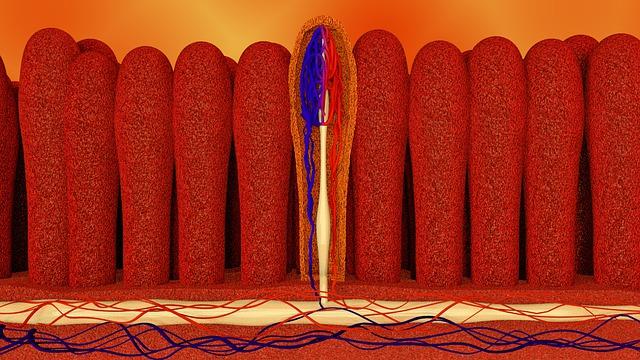 cardiomagnet hipertónia